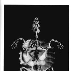 【首发】演化 动物骨骼结构摄影精选 高清(429P)