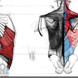 免费 王九斤-艺用人体解剖【内含高清分层psd】【整合30P】