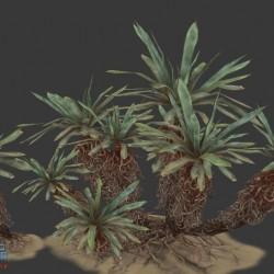 [3D资源] 沙漠植物 枯草 荒草 野草