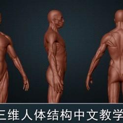 人体肌肉结构zb雕刻教程