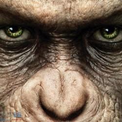 电影猩球崛起CG概念设计欣赏