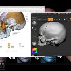 ZBrush人物面部人脸造型雕刻大师级视频教程