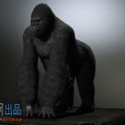 金刚黑猩猩