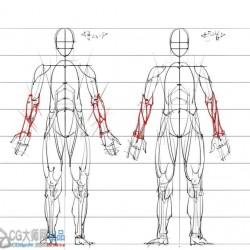 绘画专用 解剖结构肌肉骨骼图片素材解析资料下载 563P
