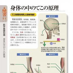肌肉的彩色插图 肌肉结构资料素材参考PDF版