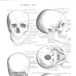 艺术家的解剖学 - 形式元素 Human Anatomy for Artists – The Elements of Form