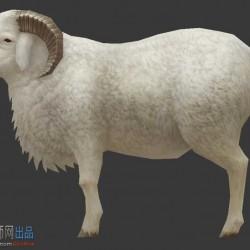写实手绘公羊