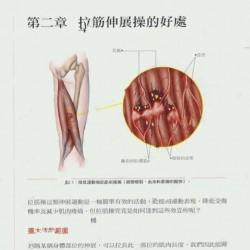 艺用解剖学酸痛拉筋解剖书书籍杂志