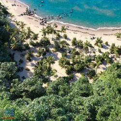 超唯美热带沙滩植物海滩海水场景3D模型