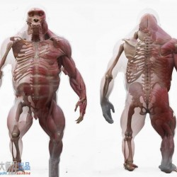 高精度大猩猩3D扫描身体肌肉骨骼解剖3D模型