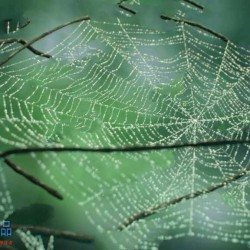 Cobwebs蜘蛛网丛状结构3dsmax插件