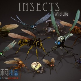 Wild Life - Insects(野生生物-昆虫)